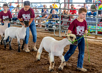 2019-07-10 Jr. Sheep Show - LB-17