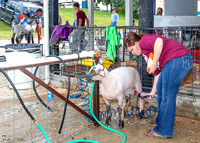 2019-07-10 Jr. Sheep Show - LB-8