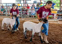 2019-07-10 Jr. Sheep Show - LB-18