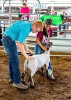 2019-07-10 Jr. Sheep Show - LB-22