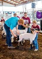 2019-07-10 Jr. Sheep Show - LB-23