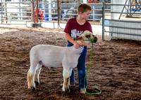 2019-07-10 Jr. Sheep Show - LB-47