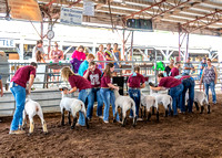 2019-07-10 Jr. Sheep Show - LB-56